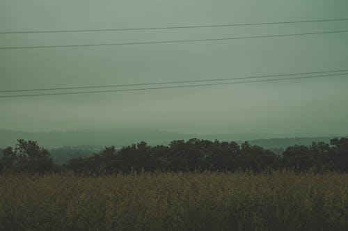 Foto profissional grátis de aborrecido, árvores, cênico, enevoado