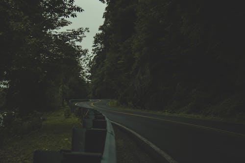 Foto profissional grátis de aborrecido, acostamento, árvores, calçada
