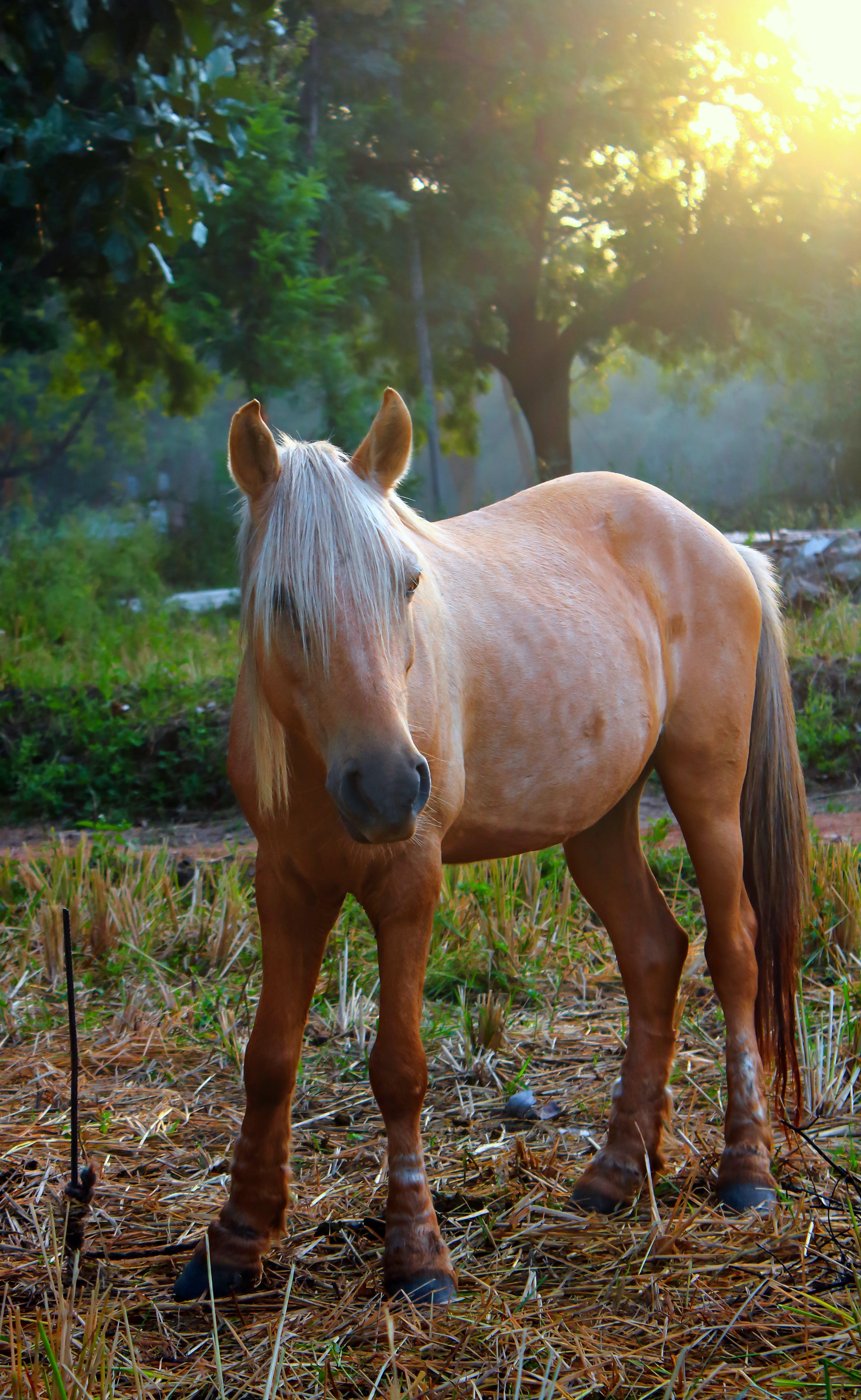 Free stock photo of alone, angel, animal, beautiful