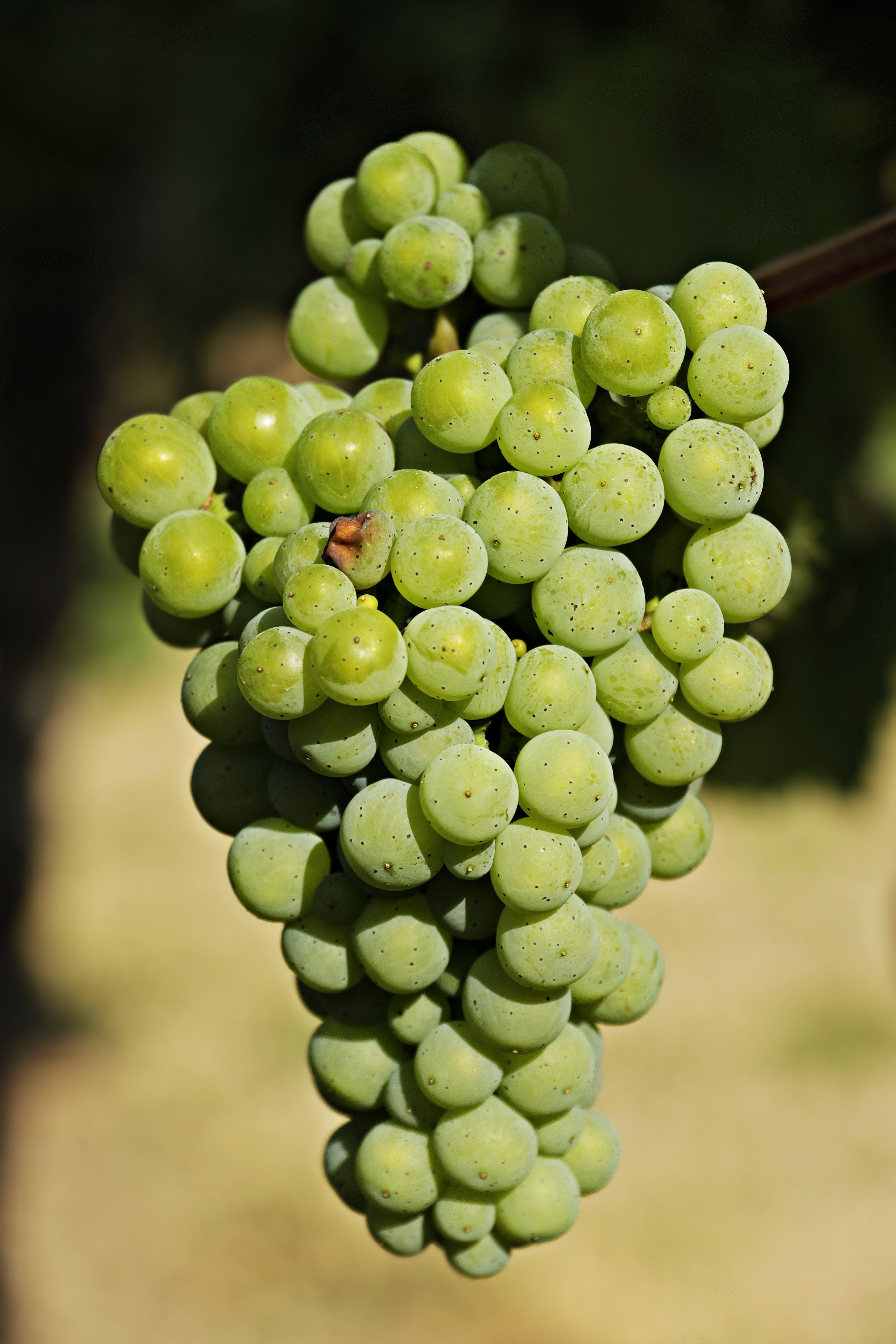 Bundle of Green Grapes