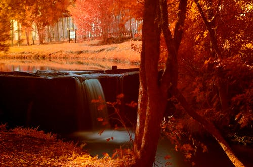 açık, ağaçlar, bulanıklık, gün batımı içeren Ücretsiz stok fotoğraf