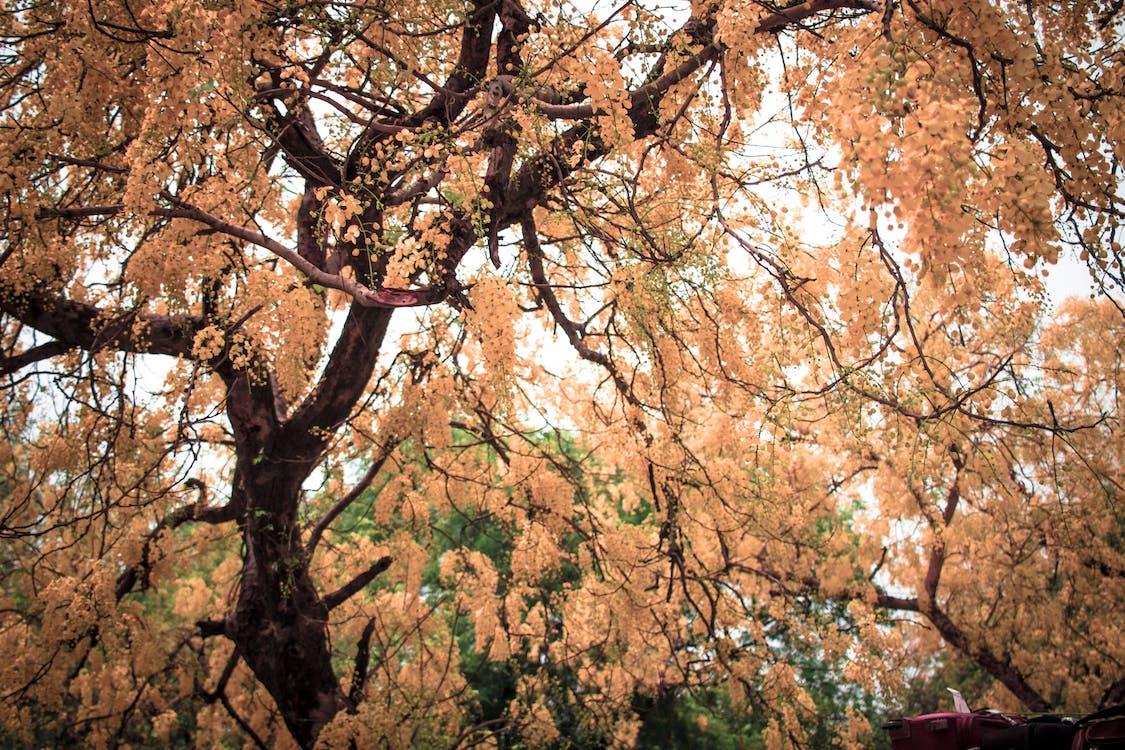 amor, arbres, bonic
