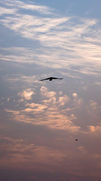 divočina, krásný, létání