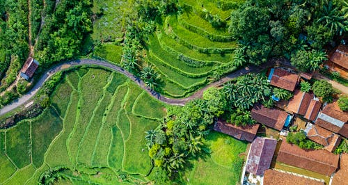 Aerial Photography Of Rice Terraces