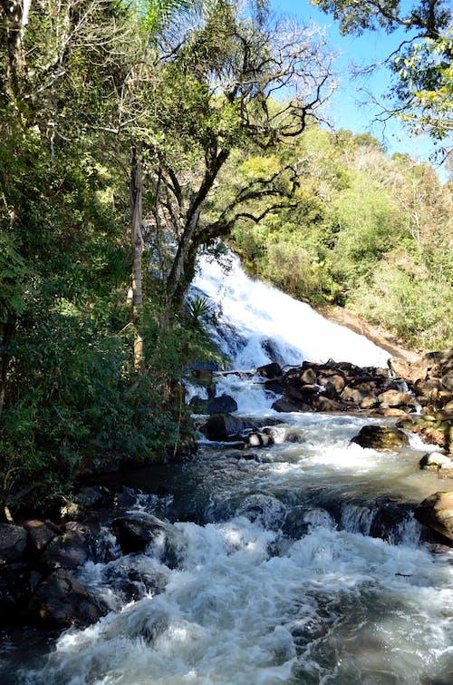 Imagine de stoc gratuită din apă, arbori, curent, pietre