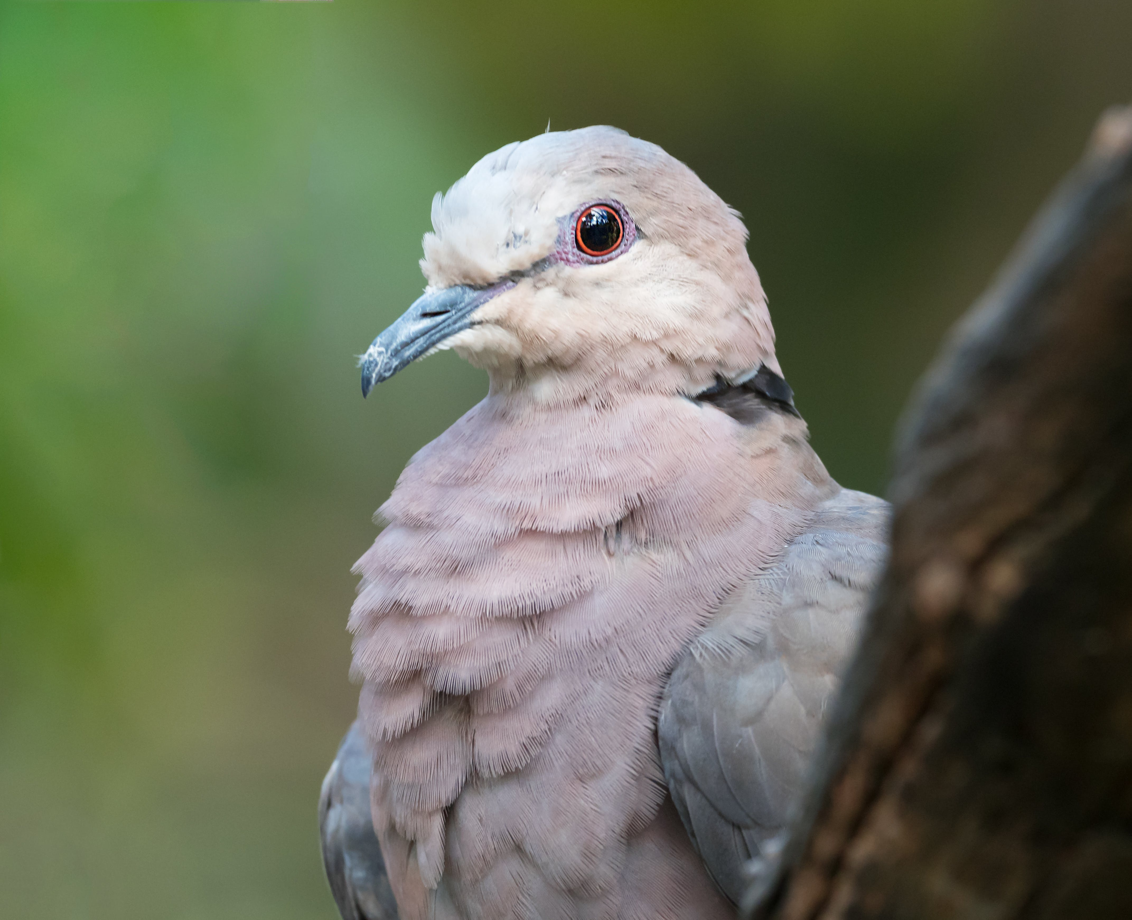 White Bird