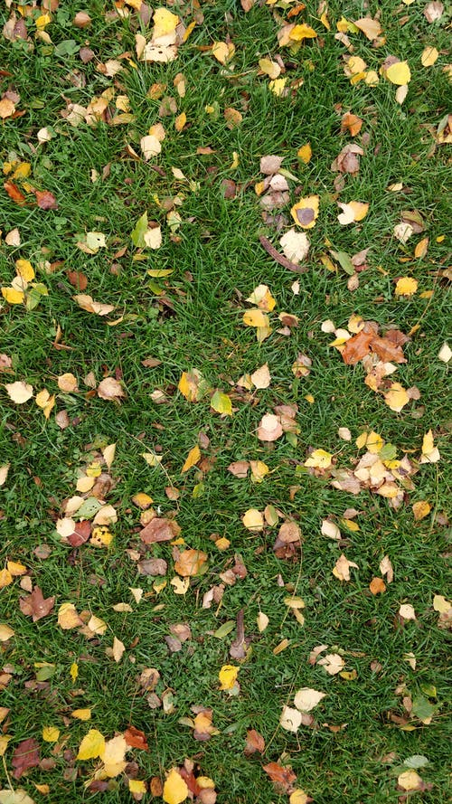 Free stock photo of grass, grass texture, topdown
