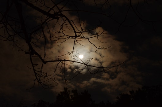 Silhouette of Tree Branch Under White Cloudy Skies during Nighttime