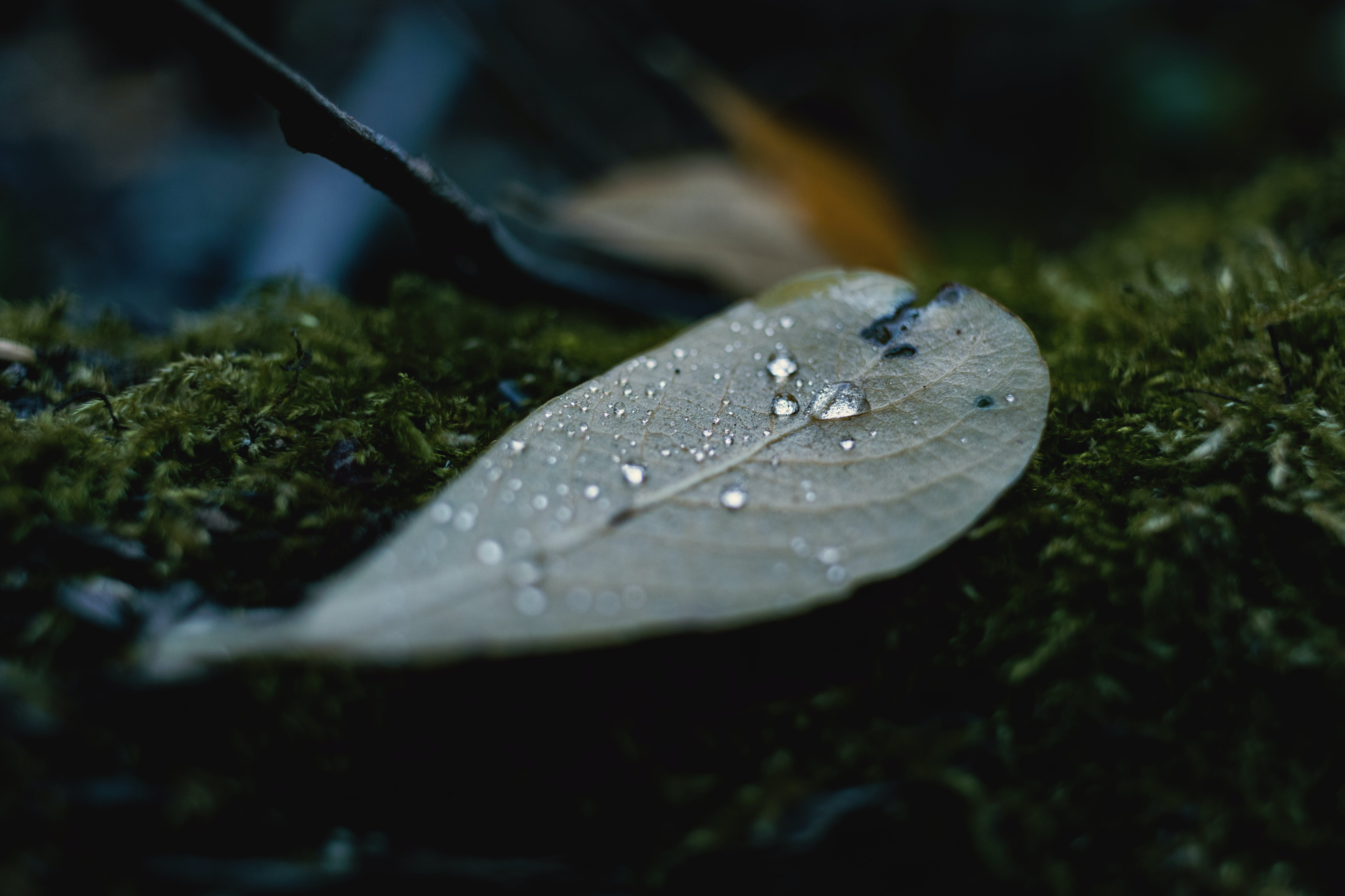 Close-up Photography of Leaf
