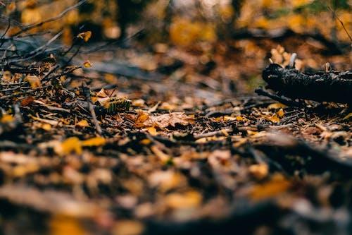 Fotos de stock gratuitas de hojas secas, profundidad de campo, secar
