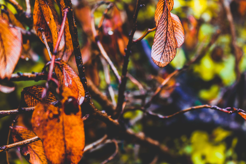 Free stock photo of #hdwallpaper, #leaves, #trees, #wallpaper