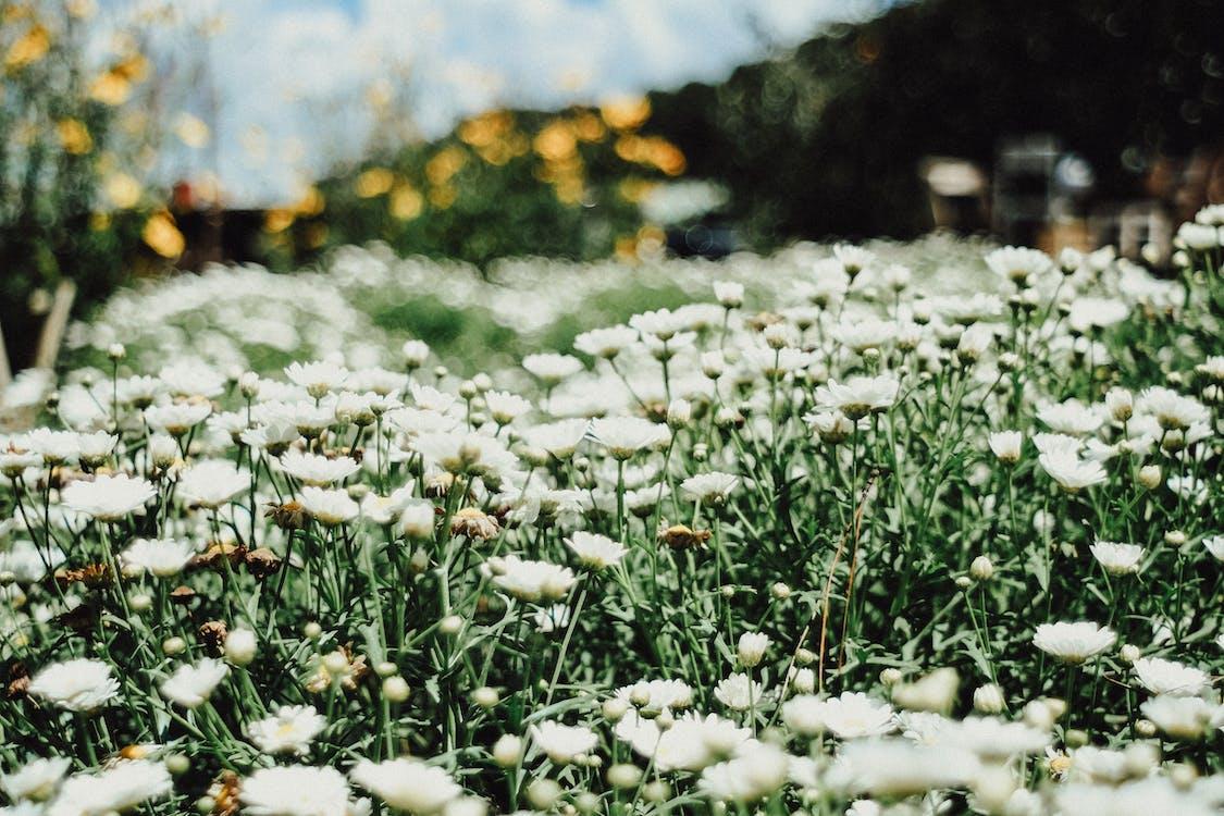 barvy, bílá, flóra