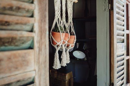 Foto profissional grátis de decoração, pendurado, plantas de interior, potes