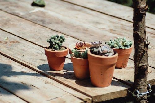 Foto profissional grátis de plantas, plantas de interior, plantas suculentas, suculento