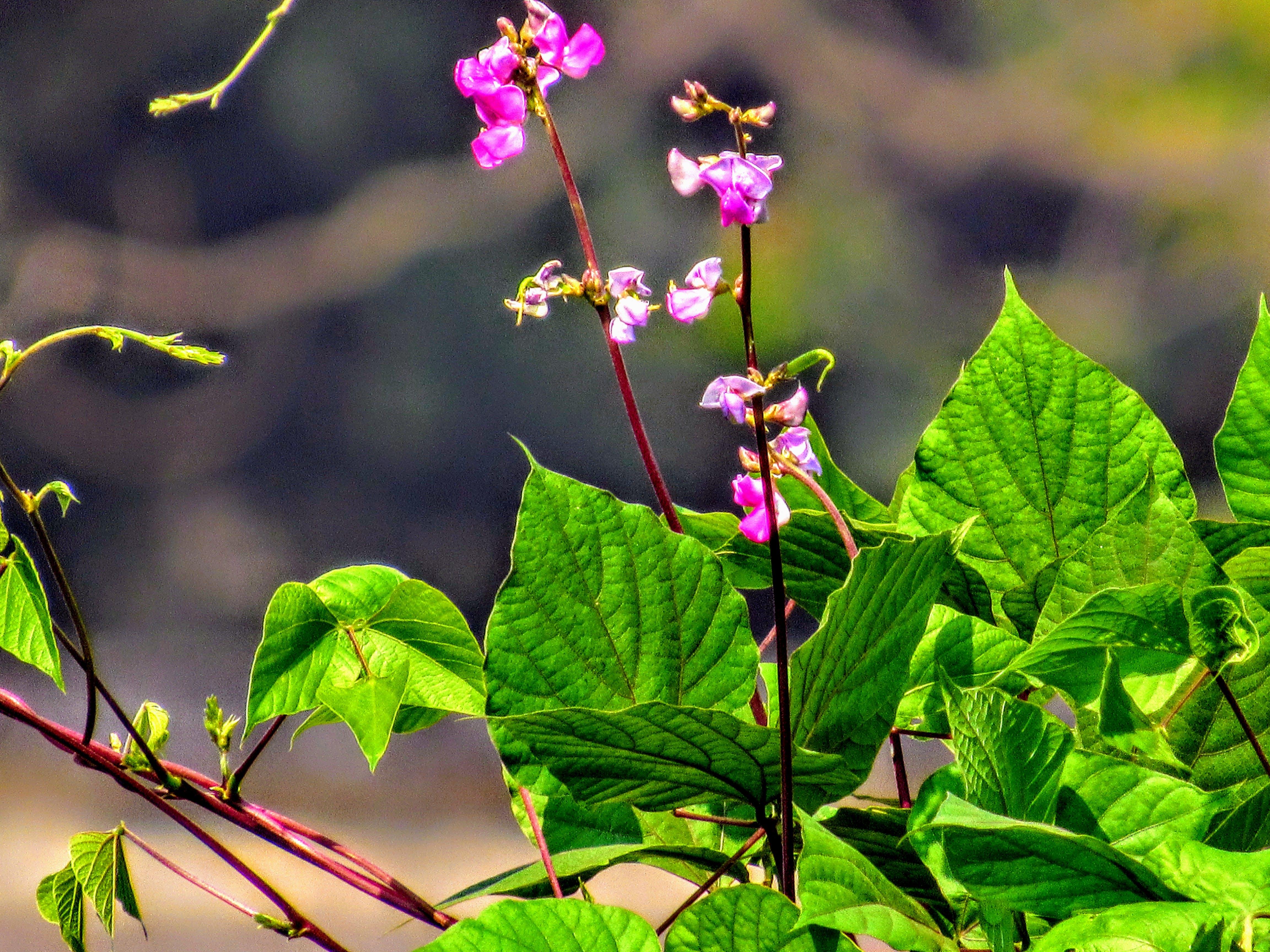 Free stock photo of #flowers