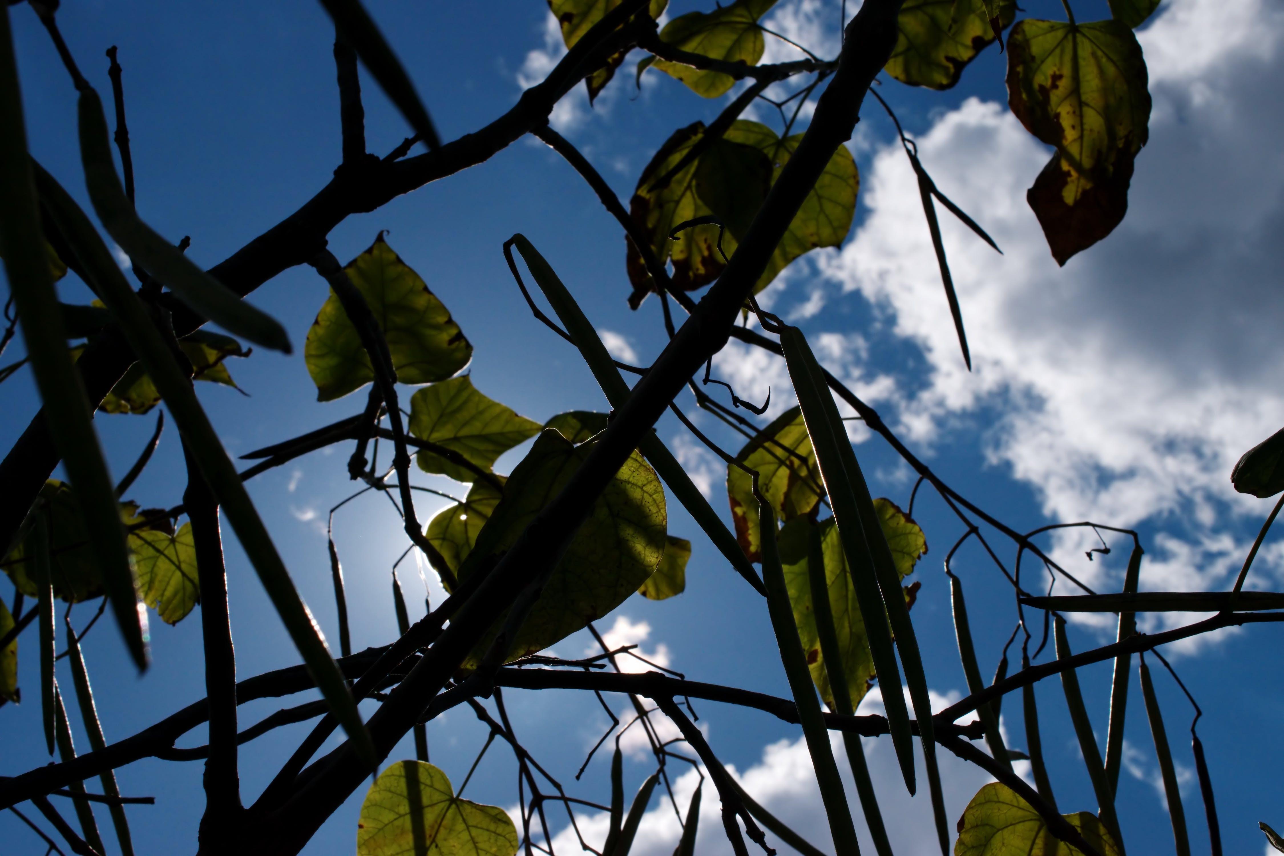 Free stock photo of clouds, sky, sun, twigs
