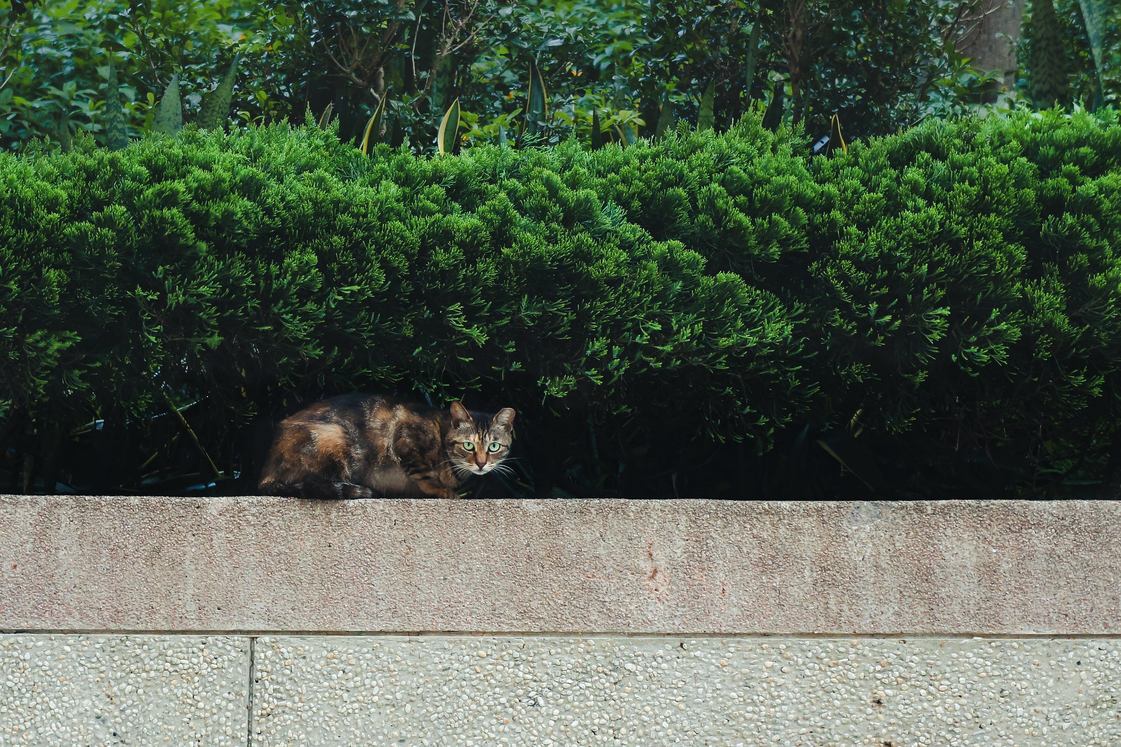 Brown and Orange Cat
