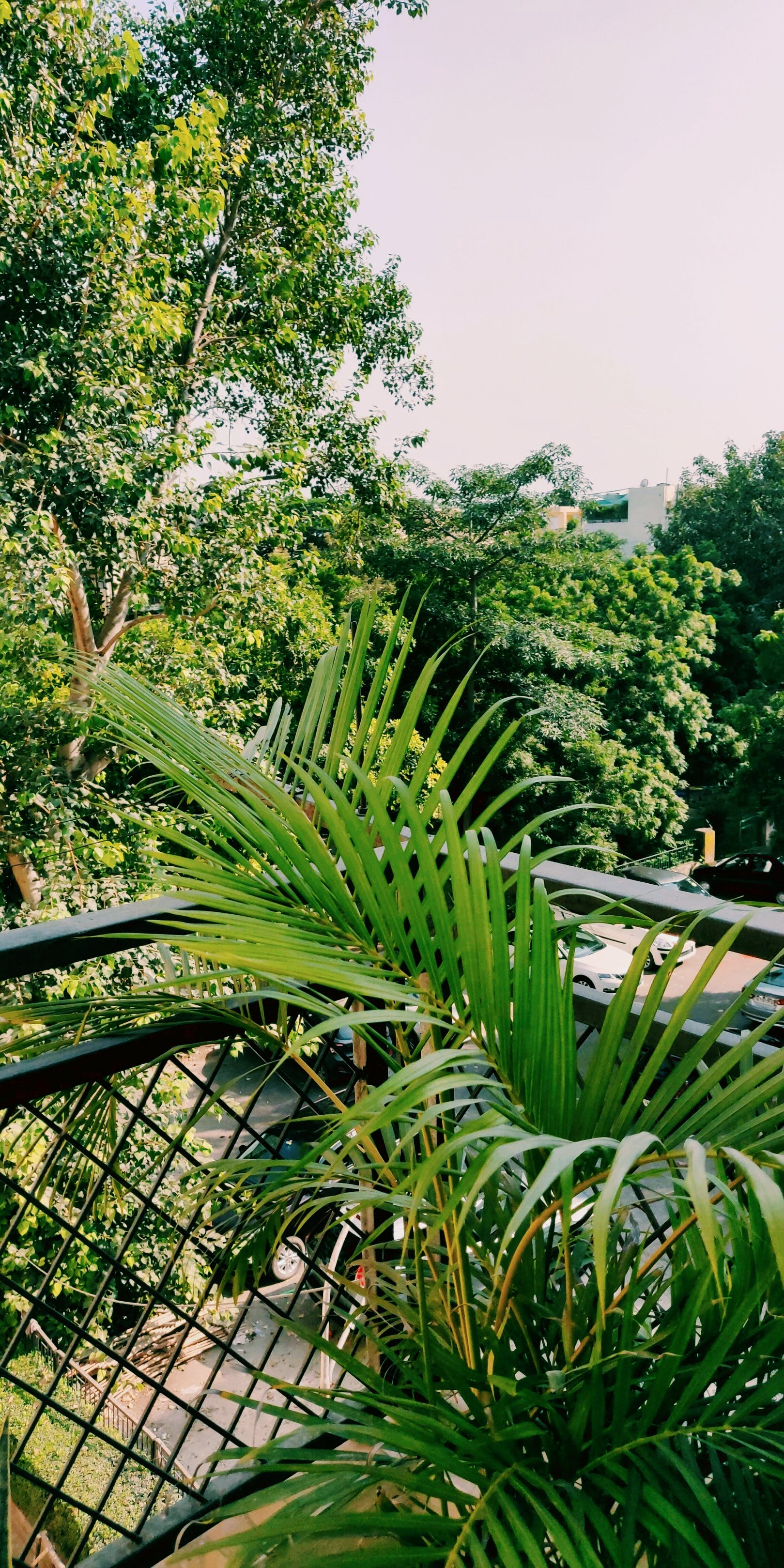 Free stock photo of #green #plants #urban