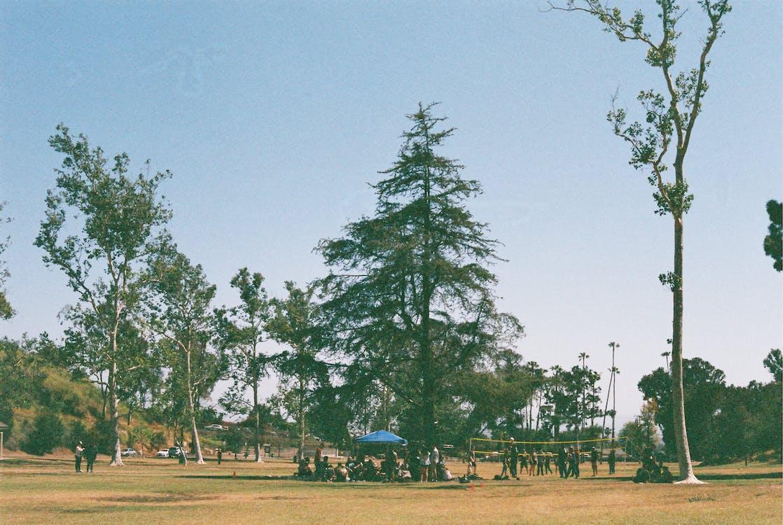 35 mm, landskab, træer