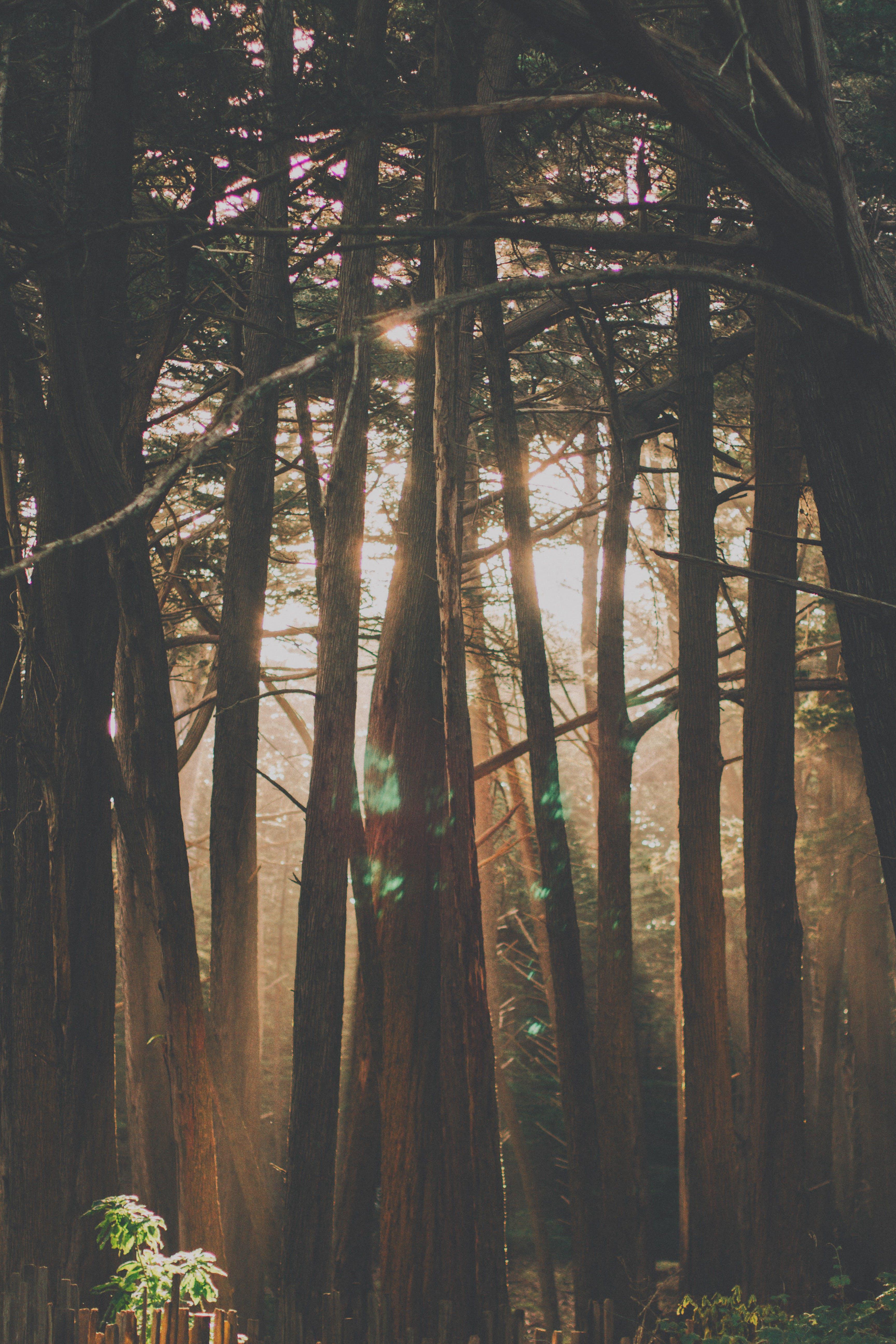 Photo of Sun Glare Through Forest Trees