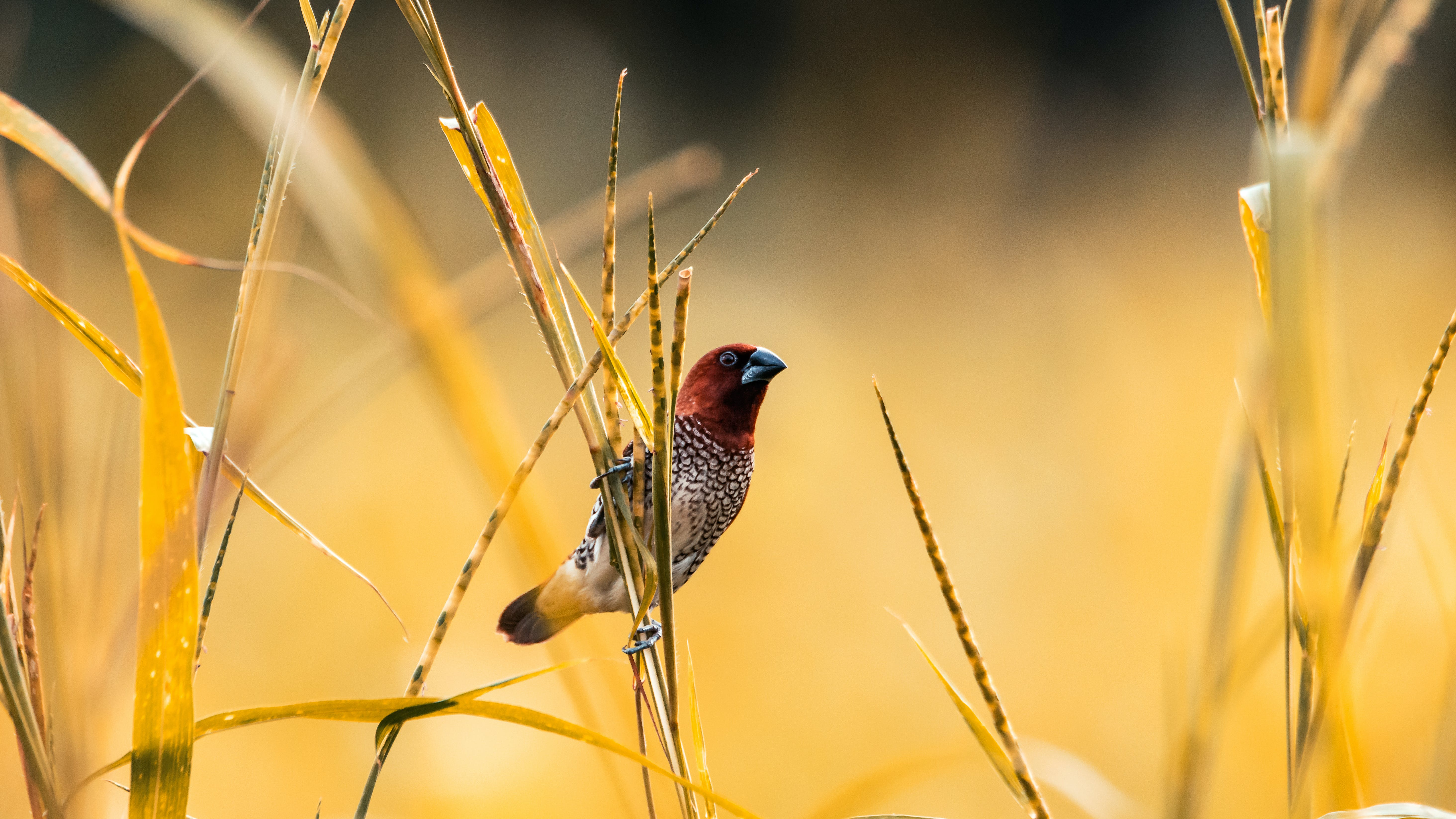 Selective Focus Photography of Scaly Munia Perching on Branch
