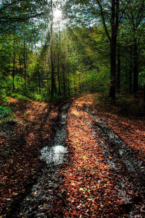 Gratis lagerfoto af sti i skoven