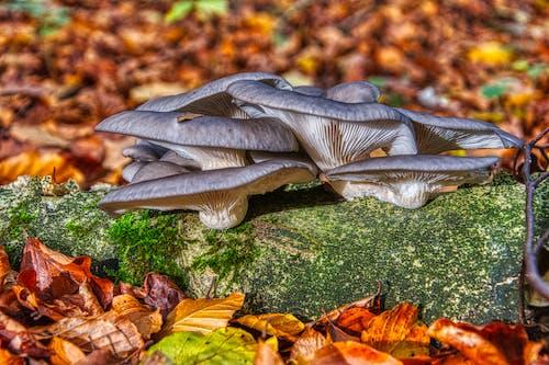 Gratis lagerfoto af skovsvamp, svamp