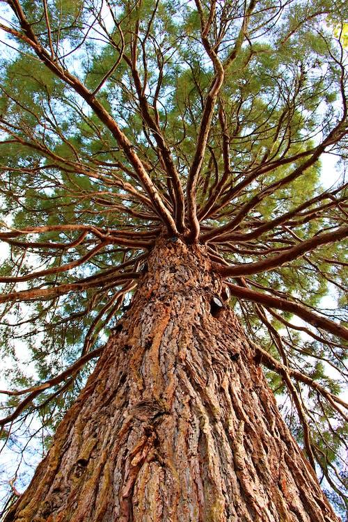 Free stock photo of nature park, pine tree