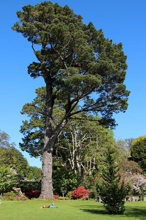 Free stock photo of botanical garden, nature park, relaxation