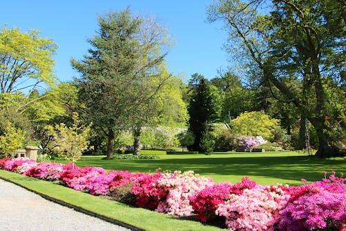 Free stock photo of beautiful flowers, botanical garden, colours