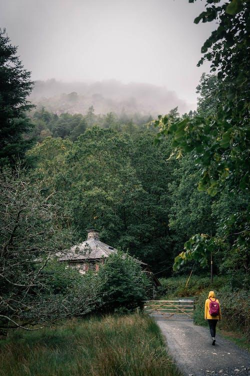 Foto d'estoc gratuïta de amb boira, arbres, aventura, boira