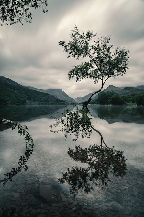 Foto d'estoc gratuïta de aigua, arbre, ennuvolat, Fons de pantalla HD