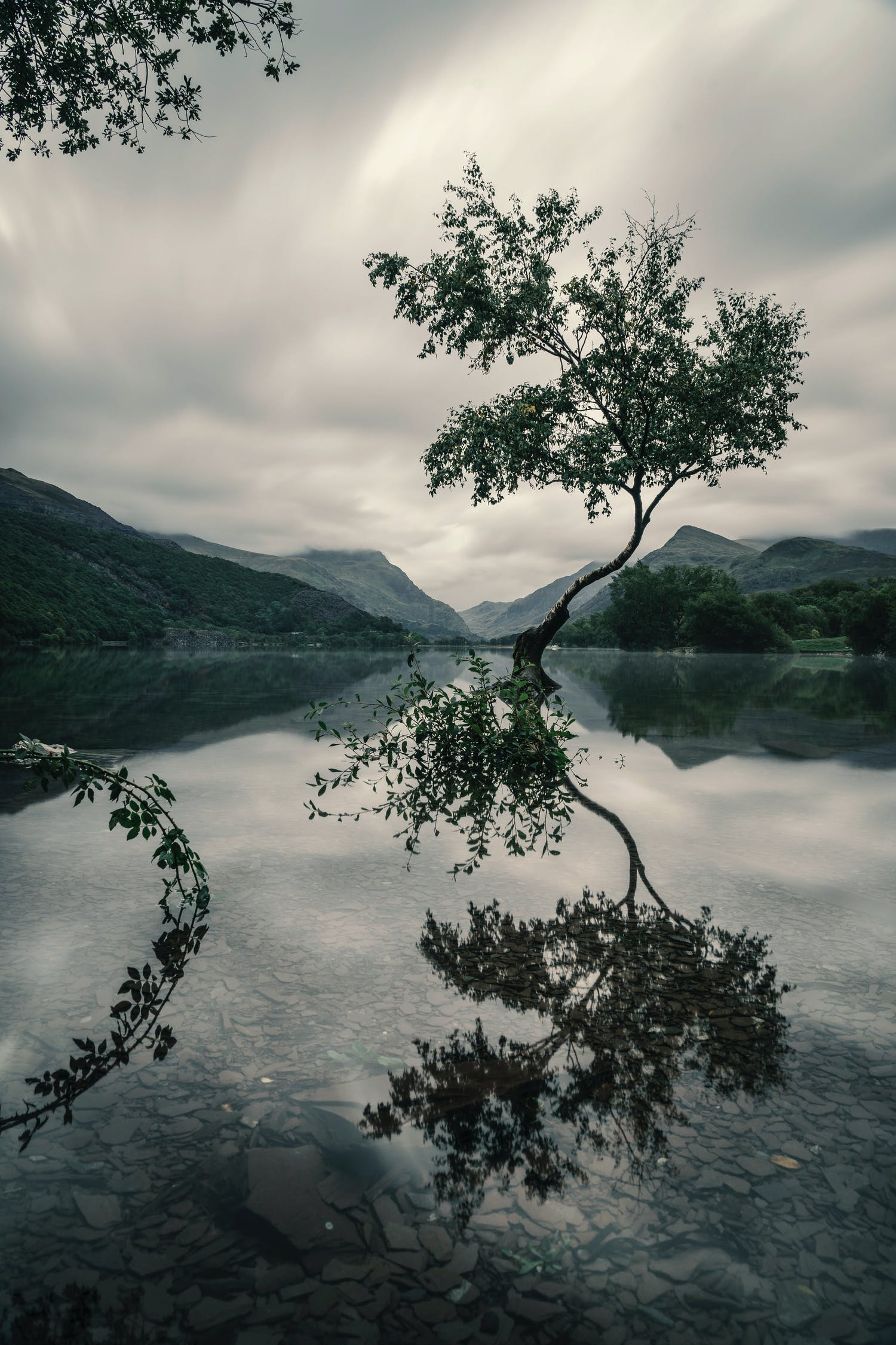 Tree With Reflection on Body of Water