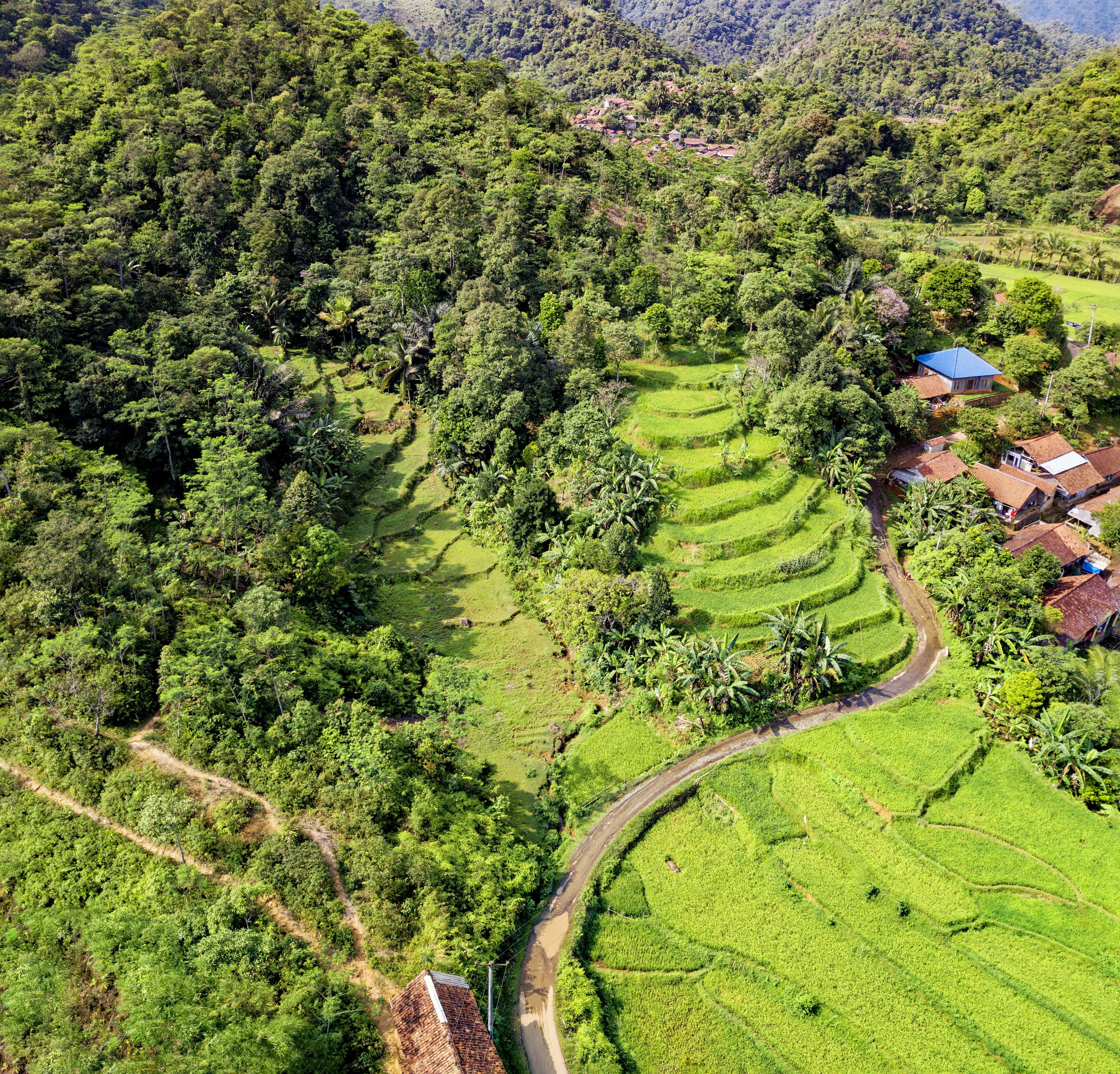 Bird's Eye View of Rice Terraces