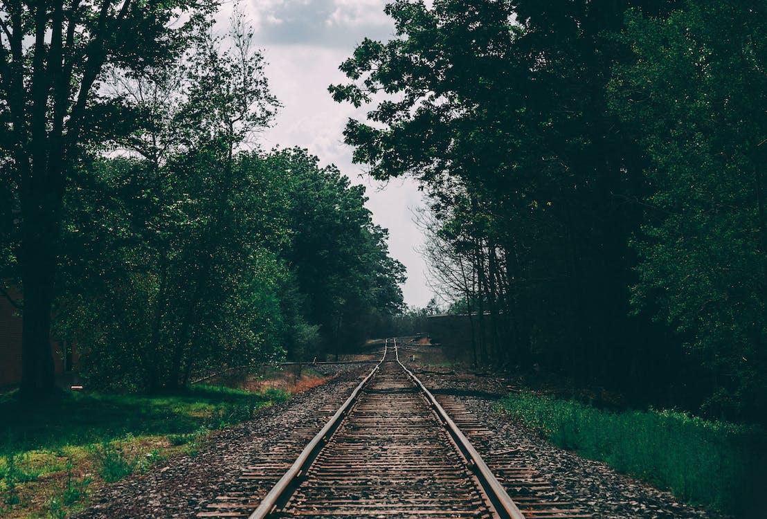 ağaçlar, demir yolu, Demir yolu rayları