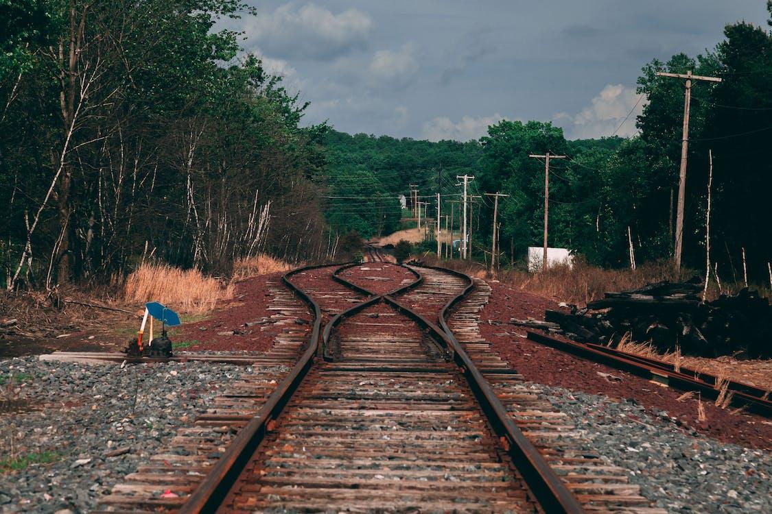 arbres, chemin de fer, chemins