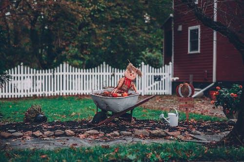 Gratis stockfoto met bloem, bomen, gedroogde bladeren, gieter