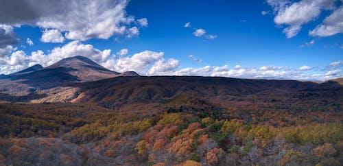 Foto d'estoc gratuïta de arbres, des de dalt, foto aèria, llum del dia