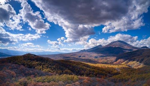 Foto d'estoc gratuïta de arbres, bosc, cel, llum del dia