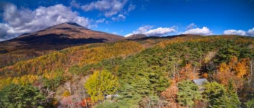Foto d'estoc gratuïta de arbres, núvol