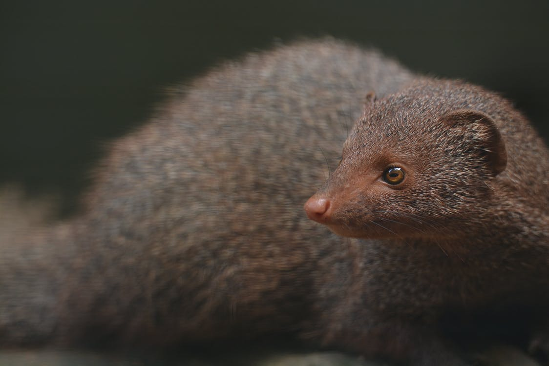 Close-up Photography Of Animal