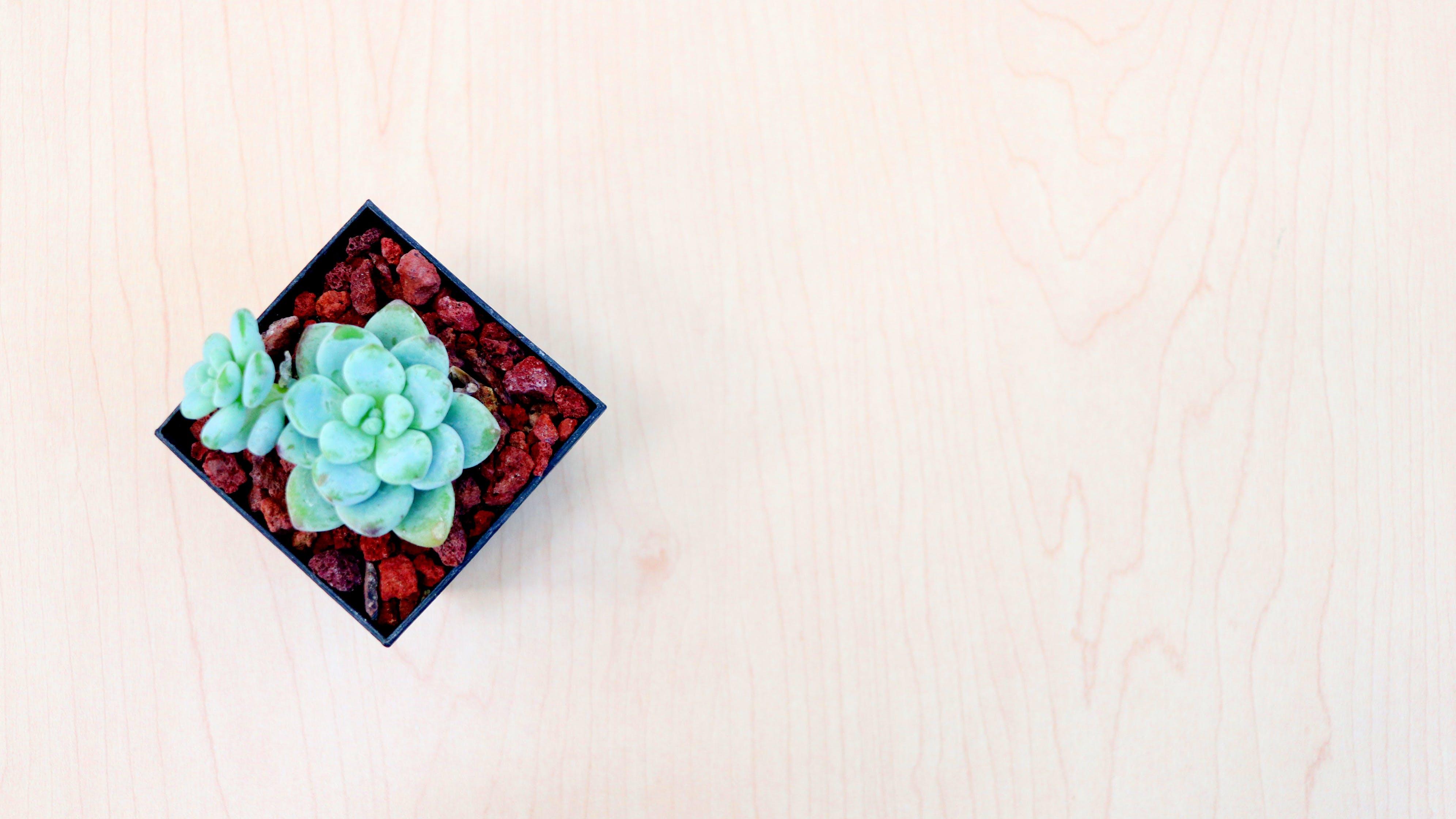 Fotobanka sbezplatnými fotkami na tému kancelársky stôl, minimalizmus, minimálny, rastlina