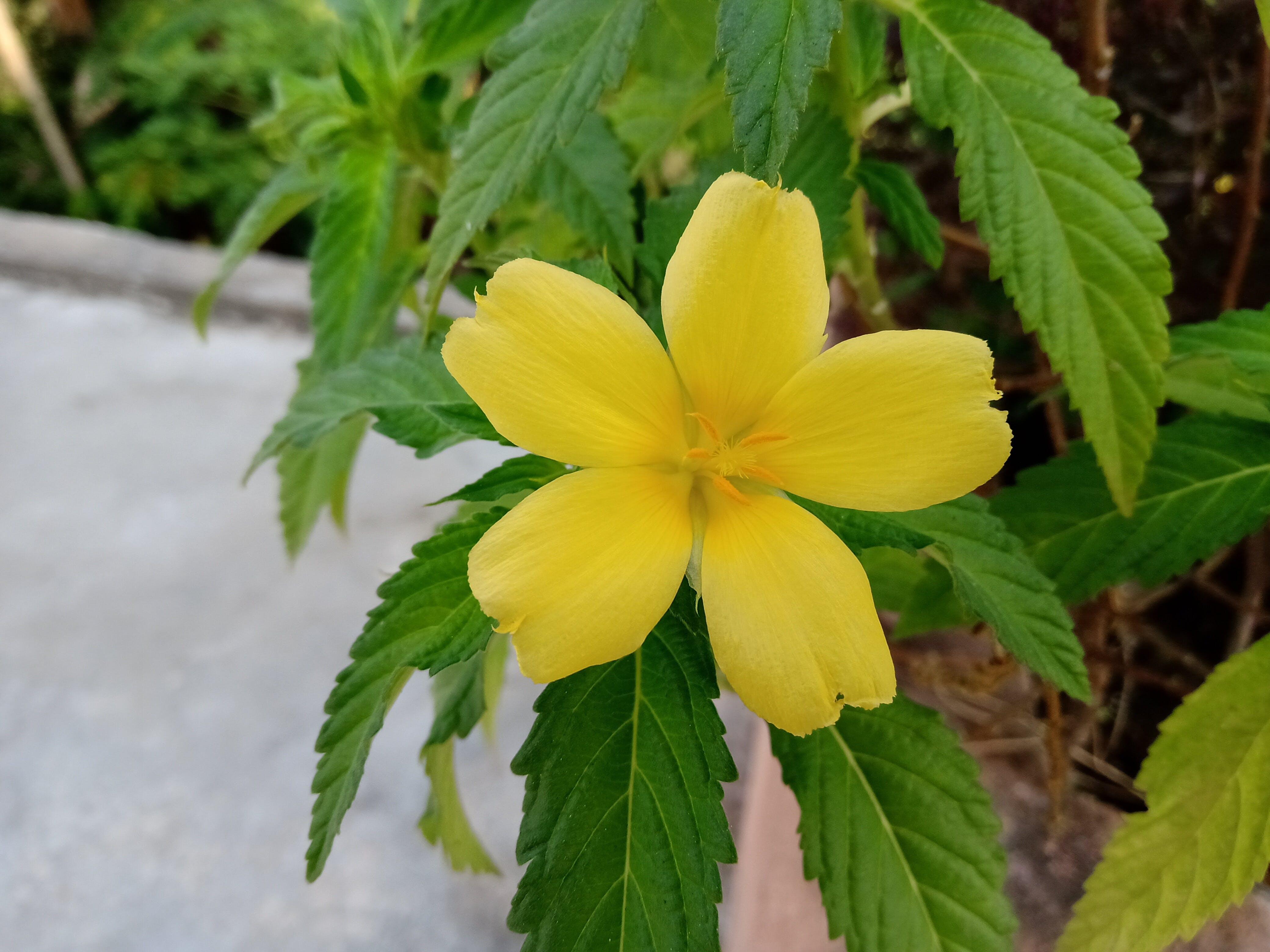 Fotos de stock gratuitas de belleza natural, medicina natural, mejores fondos de pantalla de alta definición, naturaleza