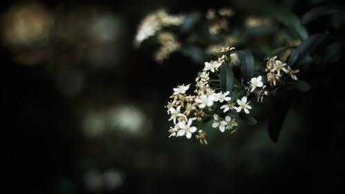 Fotobanka sbezplatnými fotkami na tému detailný záber, farby, flóra, fotografia prírody