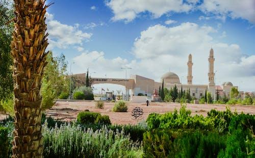 Gratis stockfoto met ahu, moaid mefleh, تمريض, جامعة الحسين بن طلال