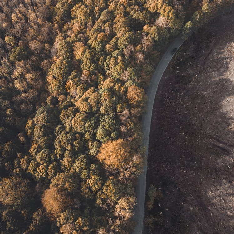 ilmakuva, lintuperspektiivi, metsä
