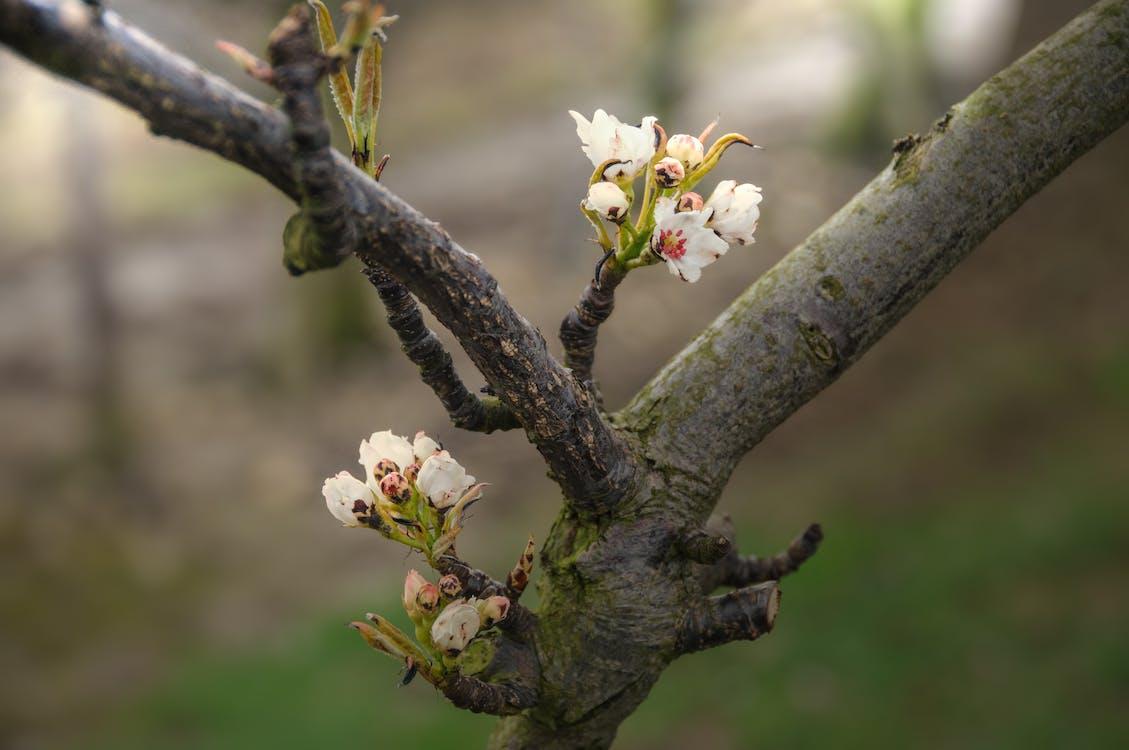 άνθος, δέντρο, φύση
