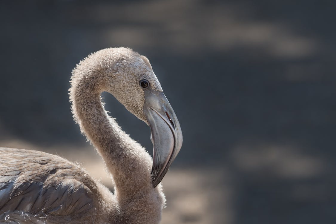 Close-up Photography of White Flamingo