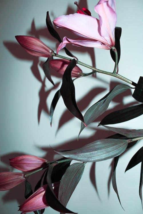 계절, 계절성, 꽃의 무료 스톡 사진