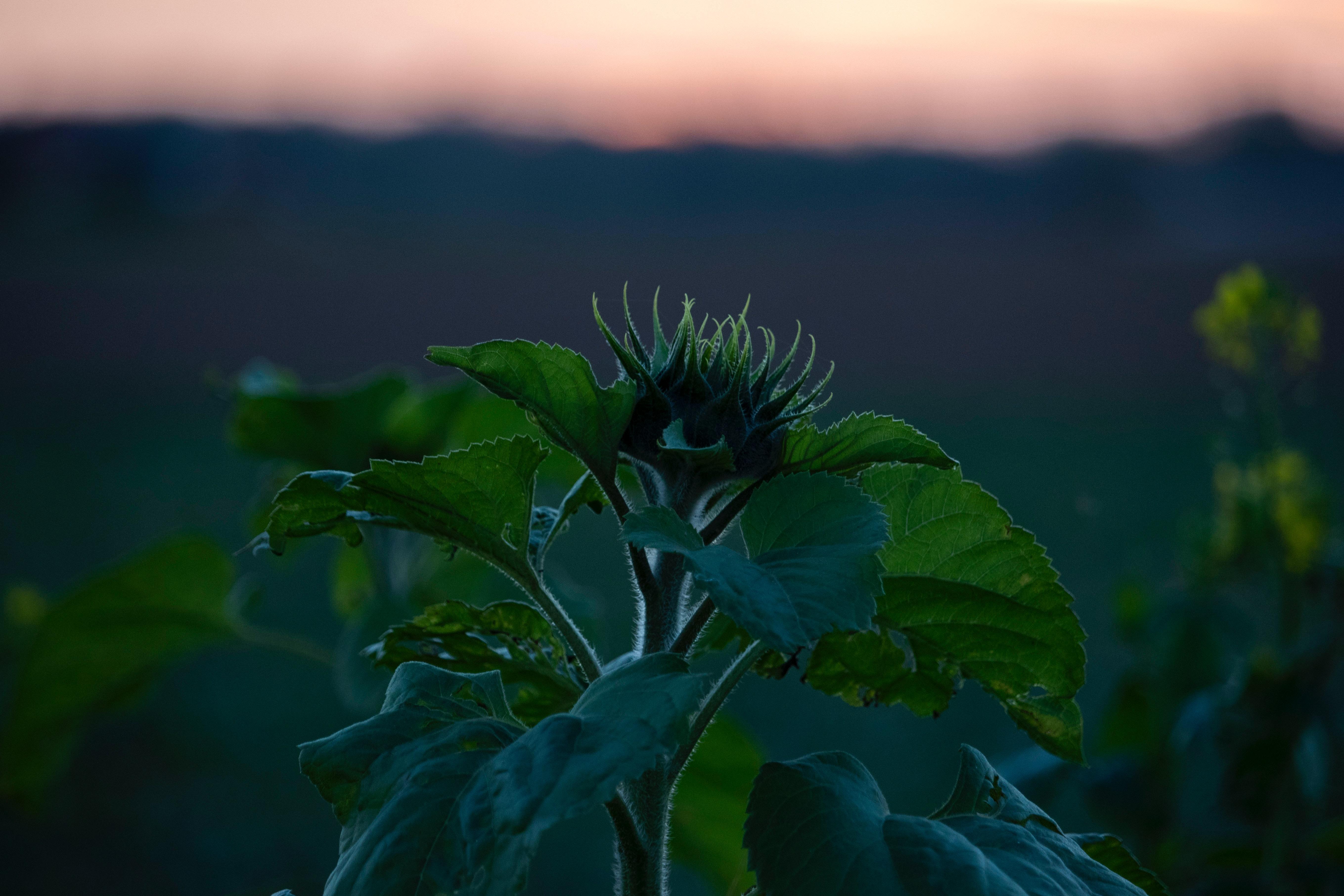 Foto Stok Gratis Tentang Bunga Fokus Selektif Hijau